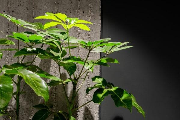 plant concrete